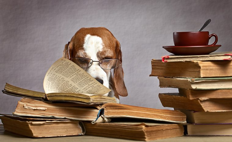 dog-reading-stack-of-books